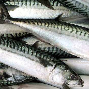 Ryby to zdrowy element naszej diety.
