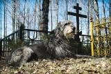 Wierne nawet po śmierci. Te psy podbiły serca na całym świecie. Najbardziej wzruszające historie lojalnych czworonogów