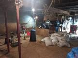 Nielegalna krajalna tytoniu w opuszczonym gospodarstwie zlikwidowana. Zabezpieczono 2,5 tony tytoniu