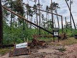 Rusza sezon na grzyby. W kilku miejscach w regonie obowiązuje jednak zakaz wstępu do lasu!
