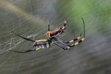 Jak wyglądają jadowite pająki w Polsce i w łódzkim? Najbardziej jadowite pająki w Polsce 24.09.2021