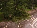 Nawałnica nad Szczecinem. Powalone drzewa, 27 interwencji straży pożarnej [foto]