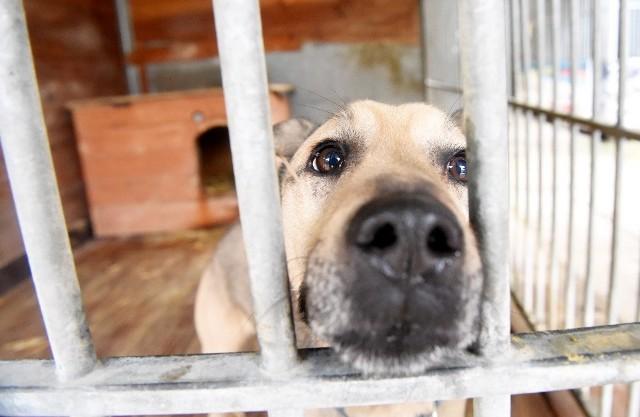 Organizacja OTOZ Animals, która od nowego roku opiekuje się Schroniskiem dla Bezdomnych Zwierząt w Zielonej Górze, ruszyła ze zbiórką pieniędzy na modernizację placówki.