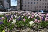 Łódź wiosennie rozkwita. Zazieleniły się skwery, parki i zieleńce.