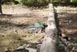 Las przy ul. Waszczyka i park Tysiąclecia w Zielonej Górze toną w śmieciach. Niektórzy traktują je jak wysypisko
