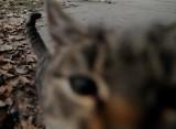Znaleziono kota... nabitego na pal