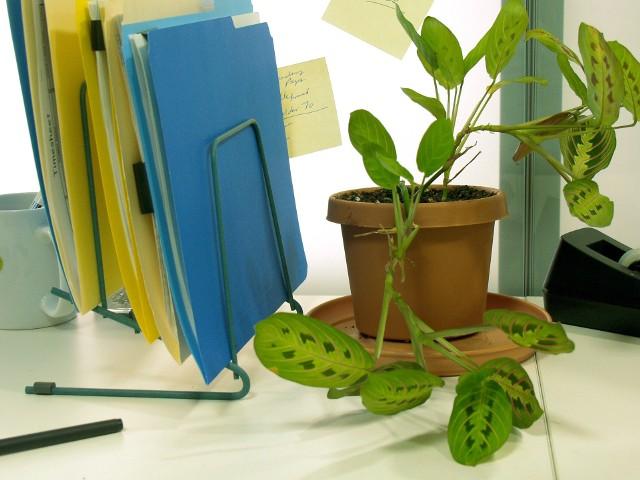 Biuro w domuW utrzymaniu ładu pomogą przegródki do przechowywania dokumentóq.