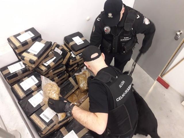 Dziewięćdziesiąt przesyłek pocztowych zakwestionowali funkcjonariusze lubuskiej Krajowej Administracji Skarbowej. Było w nich ponad 150 kilogramów nielegalnego tytoniu.Funkcjonariusze Lubuskiego Urzędu Celno-Skarbowego prowadzili kontrole na terenie Zielonej Góry i Gorzowa Wlkp. Mundurowi sprawdzali przede wszystkim tzw. punkty zbiorcze, w których następuje dalsza dystrybucja paczek. Podczas działań kontrolnych zakwestionowali łącznie dziewięćdziesiąt przesyłek. Po ich otwarciu, w każdej znaleźli krajankę tytoniową bez oznaczeń i bez polskich znaków akcyzy. Łącznie znajdowało się tam 151,5 kilograma nielegalnego tytoniu, a ciążące na nim należności zostały wyliczone na sumę 142 tysięcy złotych.Ustalono także, że większość z nich pochodziła od tego samego nadawcy. Dalsze postępowanie w tej sprawie prowadzą komórki dochodzeniowo-śledcze Lubuskiego Urzędu Celno-Skarbowego na terenie całego województwa. Funkcjonariusze sprawdzą zarówno nadawców, jak i zamawiających, którzy przypuszczali, że złożenie zamówienia przez internet gwarantuje im zupełną anonimowość. Każdy z członków tego procederu musi się liczyć z dotkliwymi karami grzywny.Zobacz też wideo: Brutalne pobicie w Zielonej Górze. Sprawcy wdarli się do mieszkania, bili kijem bejsbolowym i golfowym.