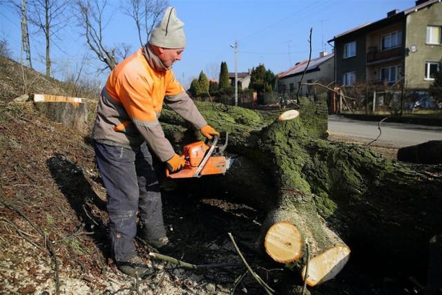 Mieszkańcy Piotrkowa protestują przeciwko wycince drzew