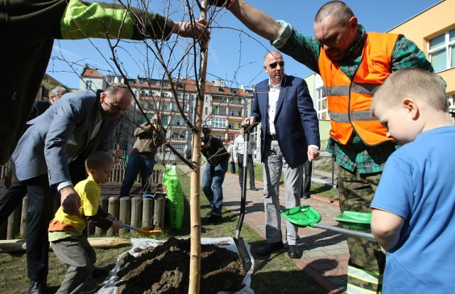 Prezydent Rafał Dutkiewicz z łopatą w dłoni udowadniał dziś, że jest przyjacielem drzew