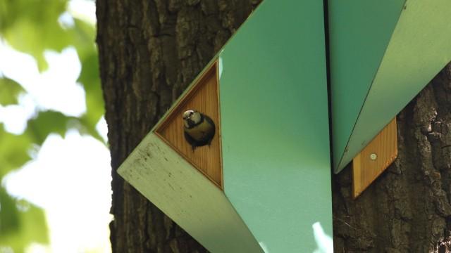 Ptaki zamieszkały w budkach lęgowych, które pojawiły się w kilku miejscach Dąbrowy Górniczej Zobacz kolejne zdjęcia/plansze. Przesuwaj zdjęcia w prawo - naciśnij strzałkę lub przycisk NASTĘPNE