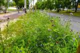 Sopot: Mieszkańcy wskażą lokalizacje kolejnych łąk kwietnych. W przyszłym roku takich miejsc ma być w kurorcie ponad dwadzieścia!