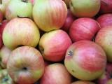 Jabłko. Ten owoc to samo zdrowie