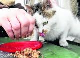 """Awantura o osiedlowe budki dla kotów w Zielonej Górze. Spółdzielnia Mieszkaniowa """"Zacisze"""" tłumaczy swoją decyzję"""