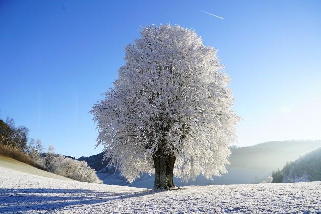Pogoda na styczeń 2020. Czy można spodziewać się nadejścia zimy trzydziestolecia?