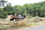 Lasy w okolicach Leszna zostaną wycięte? Organizacja Lasy i Obywatele przygotowała mapę wycinek. Lasy Państwowe twierdzą, że to manipulacja