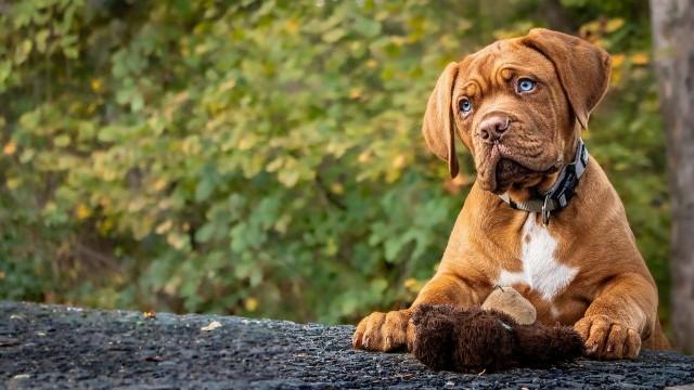 Nie od dziś wiadomo, że pies jest najlepszym przyjacielem człowieka. Te niesamowite czworonogi są niezwykle towarzyskie, przyjacielskie i wierne. Nic więc dziwnego, że posiadanie psa niesie za sobą wiele korzyści. Sprawdź w naszej galerii, dlaczego warto mieć psa.