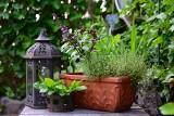 Kwiaty balkonowe, które przechowasz do wiosny. Jak przezimować kwiaty z balkonu i które gatunki się do tego nadają?