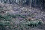 Masowa wycinka drzew przy ul. Słowackiego w Gdańsku [WIDEO,ZDJĘCIA]