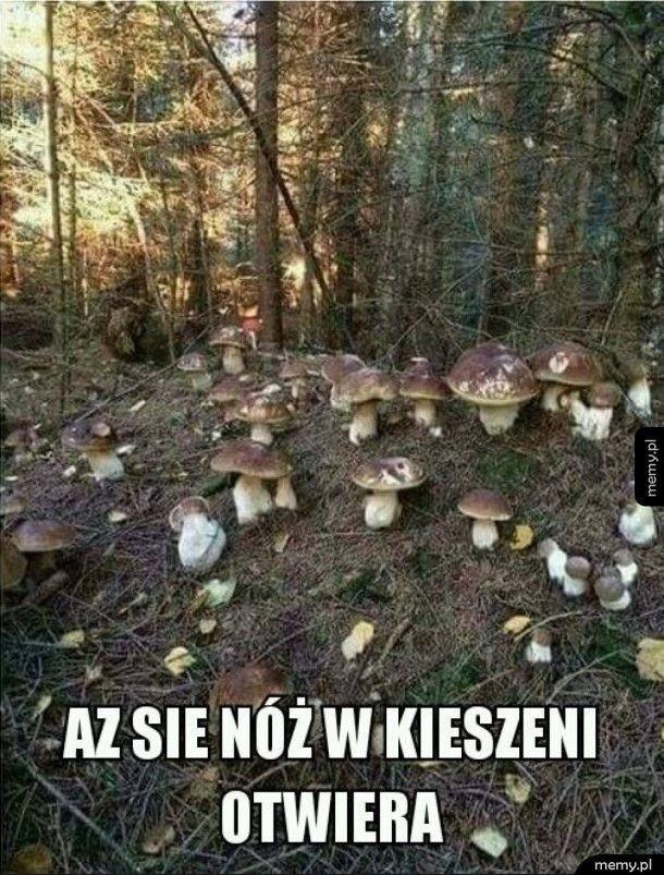 Zbieranie grzybów to dla jednych pasja i świetna forma spędzania wolnego czasu, a dla innych... spełnienie najgorszych koszmarów!