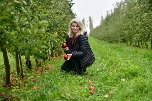 - Zbieramy już ostatnie jabłka, te co spadły pod jabłonie - mówi Monika Bankiewicz z gospodarstwa w Komorowie.