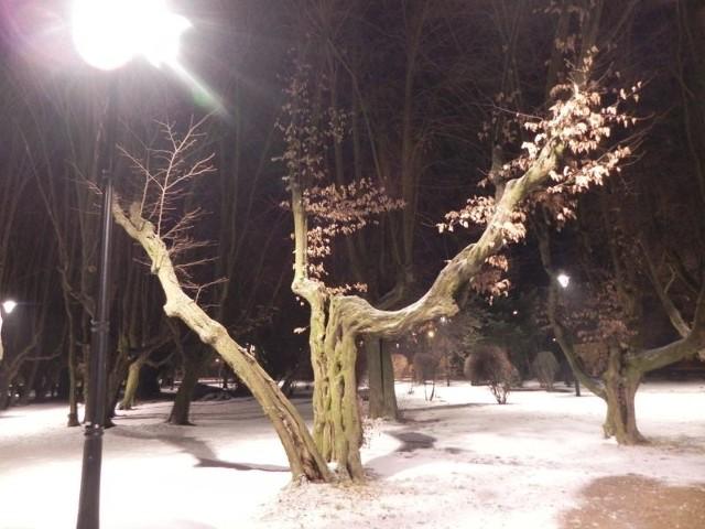 Kargowski park pochodzi z połowy XVII wieku