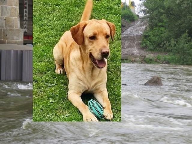 26 - latek wskoczył do rzeki Skawy w Wadowicach, by ratować psa. Porwał go nurt.