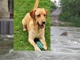 Wadowice. Rzucił się do rwącej Skawy na ratunek psu. Sam omal nie zginął. Psiaka porwała rzeka. Teraz psiaka szukają internauci