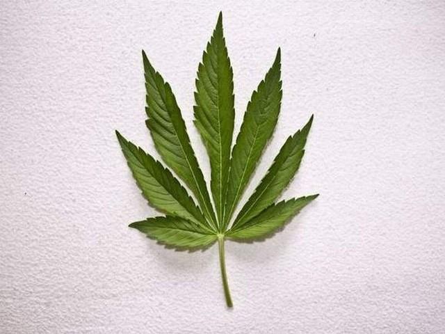 Mężczyzna posiadał prawie 200 gramów marihuany.