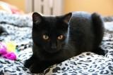 Te koty szukają domu. Przygarniesz? [ZDJĘCIA]