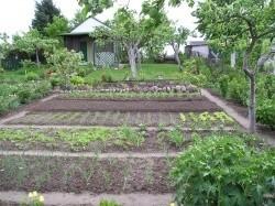 Rodzinne Ogródki Działkowe Ziemia Bielska wzbudzają emocje