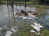 Makabra w lasach. Martwy krokodyl, rozkładające się stado bydła, tysiące zgniłych jaj - co jeszcze ludzie porzucają?