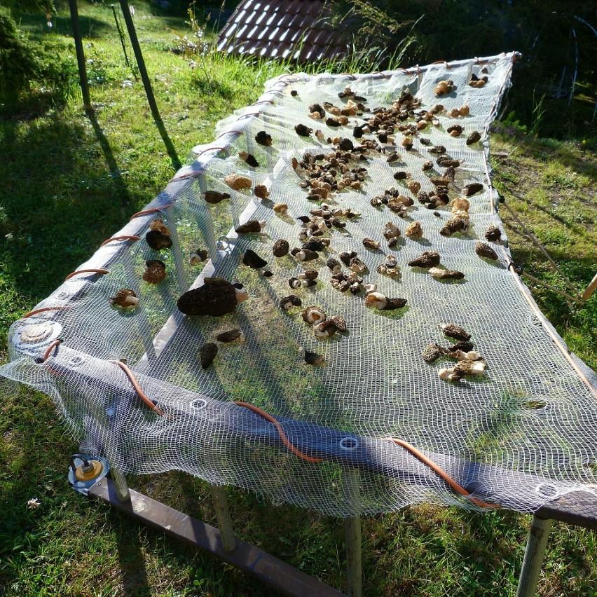 Suszenie grzybów pozwala na zachowanie ich smaku i zapachu...