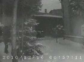 Na filmie widać, jak złodziej wycina choinkę