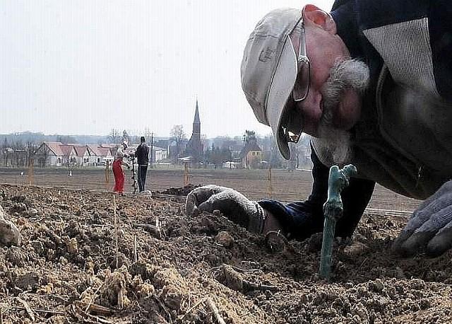 - Zbieram stąd ziemniaki, teraz będę winogrona - mówi Czesław Musiński, przygotowując otwory pod sadzonki winnej latorośli na największej winnicy w Polsce - w Zaborze