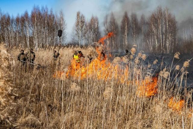 Gaszenie pożaru w Biebrzańskim Parku Narodowym