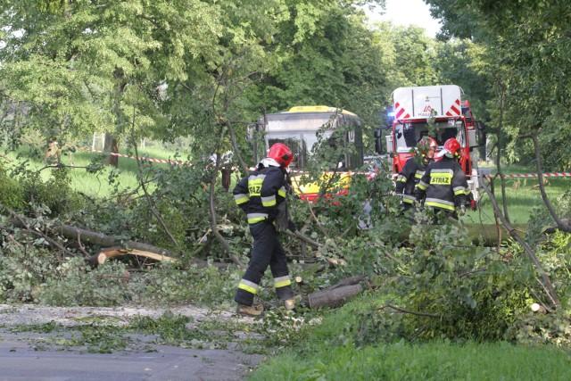 We Wrocławiu i regionie straż pożarna interweniowała ponad 30 razy po nocnych burzach. Głównie usuwano złamane konary z dróg