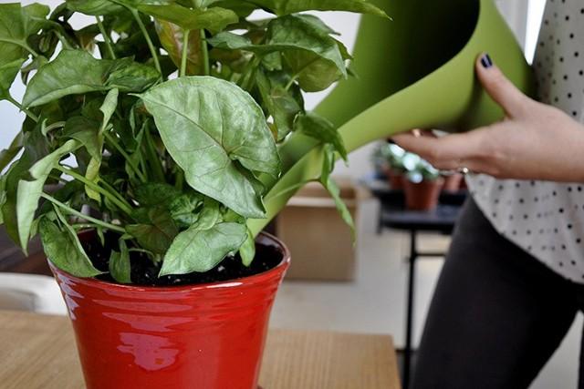 Jeśli Twoje umiejętności związane z hodowlą roślin zamieniają Twoje mieszkanie w mauzoleum botanicznych wpadek... wiedz, że nie jesteś w tym osamotniony. Marzysz, by w swoim domu stworzyć klimat dżungli, ale jesteś winny śmierci każdej rośliny, która miała nieszczęście wpaść w Twoje ręce? Uspokajamy - wszystko jest możliwe, a Twoje mieszkanie - bez względu na Twoje umiejętności (a raczej ich brak...) może się zazielenić! Musisz tylko wybrać odpowiednie rośliny. Takie, które są najbardziej odporne i przetrwają wiele więcej, niż jesteś sobie w stanie wyobrazić.Umówmy się, nie ma nic smutniejszego w mieszkaniu, niż doniczki wypełnione suchymi, smutnymi kikutkami... Zatem przychodzimy z pomocą i przedstawiamy 7 roślin, które są na tyle mało wymagające, że zabicie ich graniczy niemal z cudem. Dodatkowo są to rośliny, które poprawią klimat w twojej przestrzeni życiowej - są wysokie i jasne, wypełniają pokój czystym powietrzem i nastrajają pozytywnie.7 roślin doniczkowych, których nie zabijesz, choćbyś chciał znajdziesz na kolejnych slajdach >>>Zielony domowy ogród. Jak zrobić?Źródło: Dzień Dobry TVN/x-news