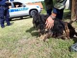 Pies w skrajnie złej kondycji został odebrany właścicielowi. Zwierzę było oblepione odchodami