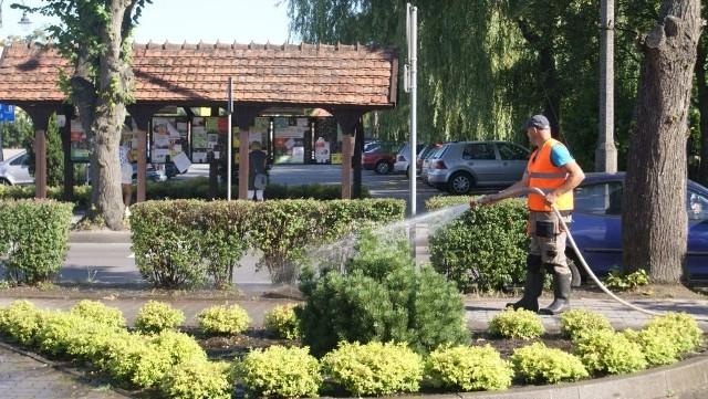 Wczoraj krzewy na ul. Dr. Zielińskiego podlewano przed godz. 10. Macie Państwo jakieś krytyczne uwagi. Znacie miejsca, których podlewanie przeoczono? Czekamy na sygnały pod nr 512 328 230