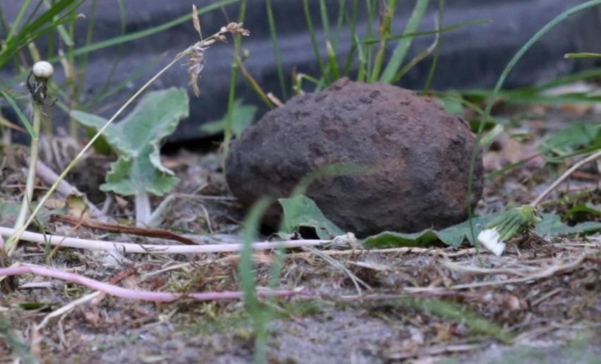 Znalezisko pochodzi prawdopodobnie z czasów II Wojny światowej