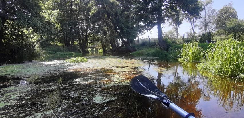 Zielona Chocina to idealna rzeka na pierwszy raz w kajaku, a...