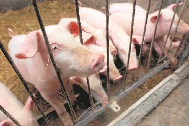 Świadectwa zdrowia świń - dokument niezbędny do sprzedaży zwierzęcia, wystawić może tylko weterynarz mający uprawnienia nadane przez inspekcję. W Szemudzie jest tylko jeden taki doktor