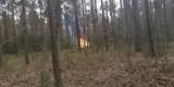 Stoczek: Katastrofa samolotu wojskowego na Mazowszu [ZDJĘCIA] MIG-29 rozbił się w lesie pod Węgrowem. Jest nagranie [WIDEO]