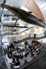 Gdańsk: Centralne Muzeum Morskie podniesione do rangi muzeum narodowego