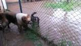 Woda zalała przytulisko dla zwierząt w Głubczycach. Wolontariusze proszą o pomoc