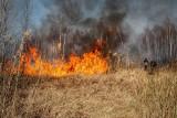 Minął rok od pożaru w Biebrzańskim Parku Narodowym. Jego pracownicy opowiadają o walce z żywiołem (zdjęcia, wideo)