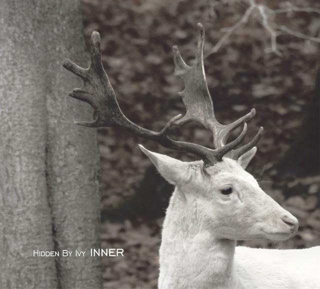 Hidden By Ivy - Inner
