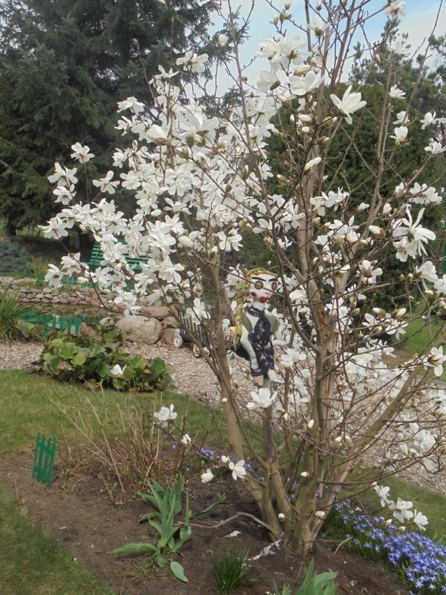 - Witam i ślę wiosenne nadal zdalne pozdrowienia, ale kwiatami usłane i śpiewem ptaków w ogrodzie, bo dalej wyjść nie mogę... - pisze w meilu do redakcji Czytelniczka z Brodnicy.