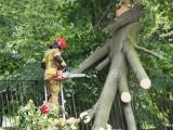 Strażacy wciąż usuwają skutki nawałnicy w Łodzi. Do uprzątnięcia zostało 40 procent zniszczeń
